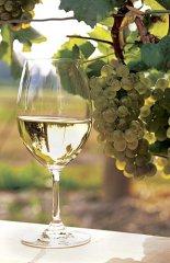лучшее белое вино