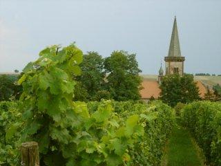 rheinhessen-vinogradnik