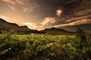 south_african_wine_farm