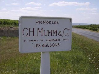 champagne_mumm_vineyard