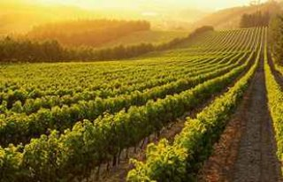 wine-regions_0