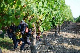 loire-wine