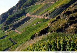 wine_mosel