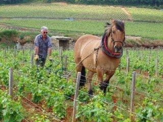 chandon-winery