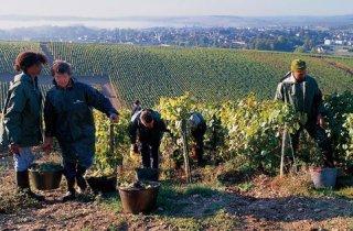 joseph_drouhin_vineyards