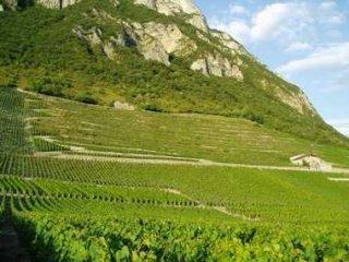 Виноградники Андре