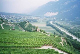 vineyards-rhone