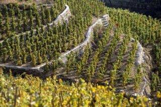 vignobles-de-provence