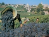 vineyards_st_emilion