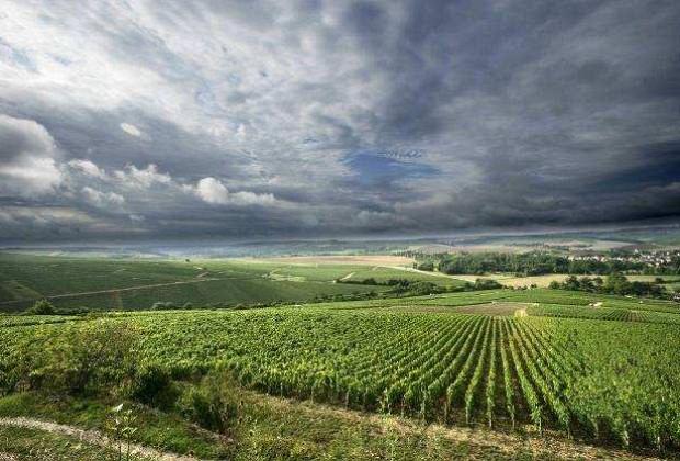 Традиции виноделия в Бургундии. Выдающиеся Домэны региона.
