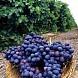 Источники повседневных ароматов в вине